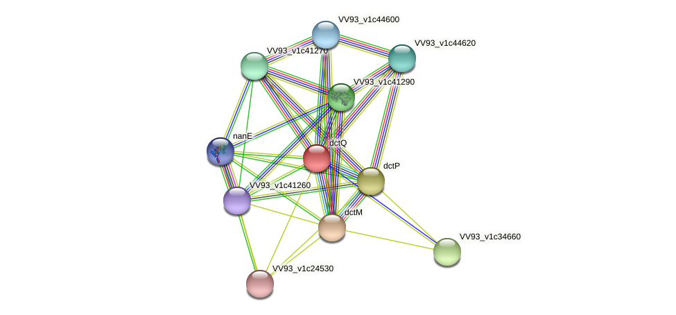 dctQ protein (Vibrio vulnificus) - STRING interaction network