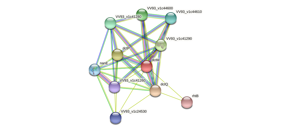 dctM protein (Vibrio vulnificus) - STRING interaction network