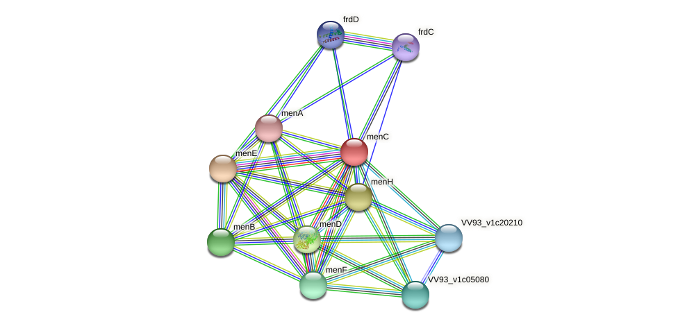 menC protein (Vibrio vulnificus) - STRING interaction network