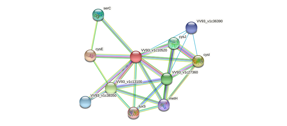 VV1133 protein (Vibrio vulnificus) - STRING interaction network