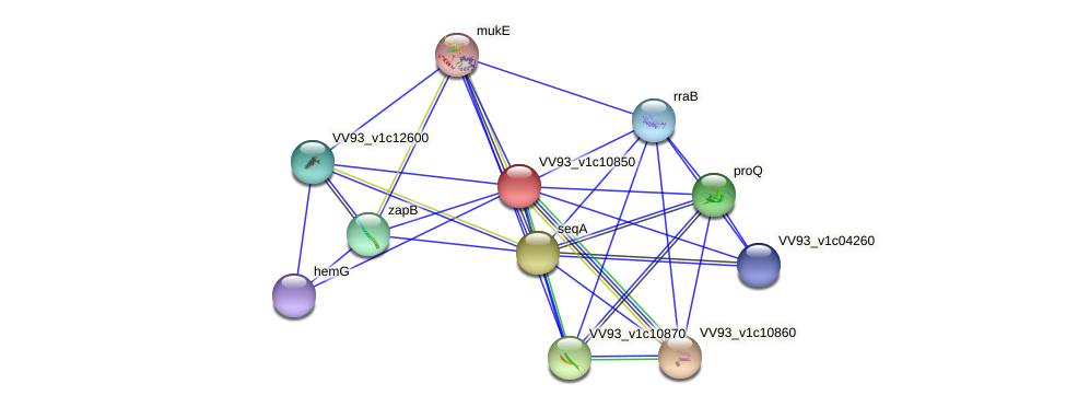 VV1165 protein (Vibrio vulnificus) - STRING interaction network