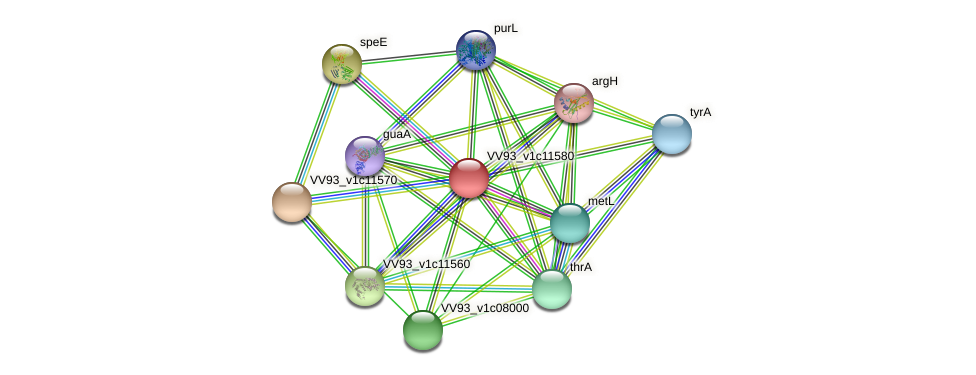 VV1238 protein (Vibrio vulnificus) - STRING interaction network