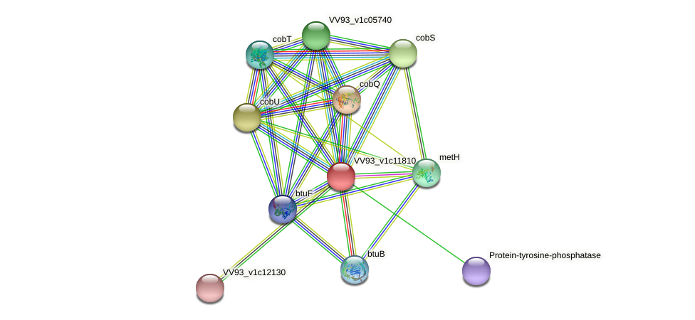 VV1263 protein (Vibrio vulnificus) - STRING interaction network