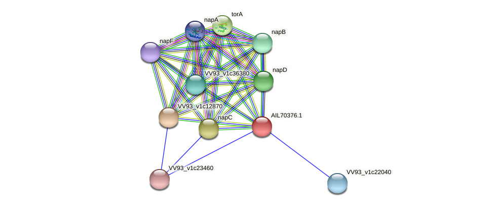 AIL70376.1 protein (Vibrio vulnificus) - STRING interaction network