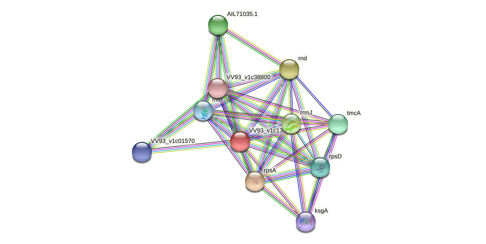 VV1465 protein (Vibrio vulnificus) - STRING interaction network