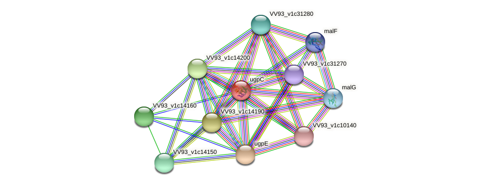ugpC protein (Vibrio vulnificus) - STRING interaction network