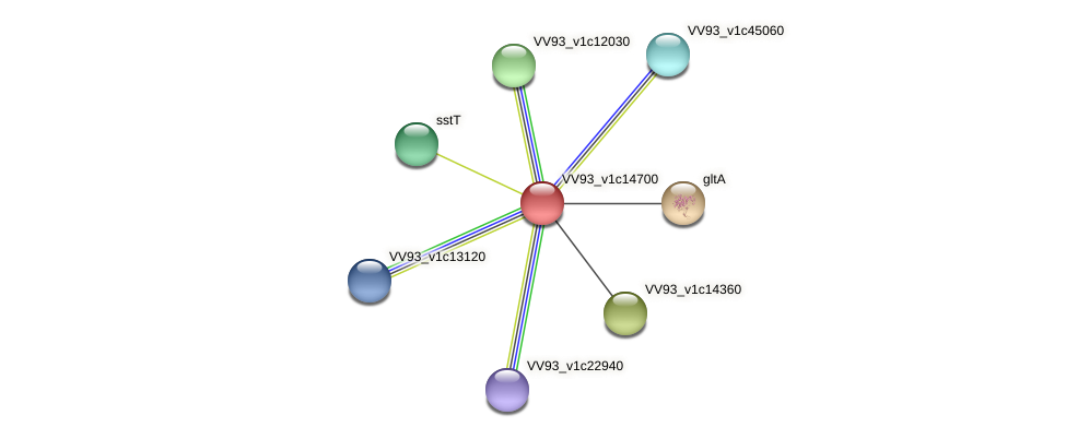 VV1595 protein (Vibrio vulnificus) - STRING interaction network