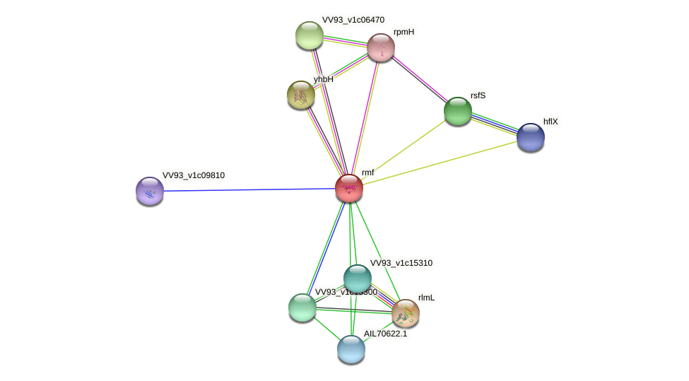 rmf protein (Vibrio vulnificus) - STRING interaction network