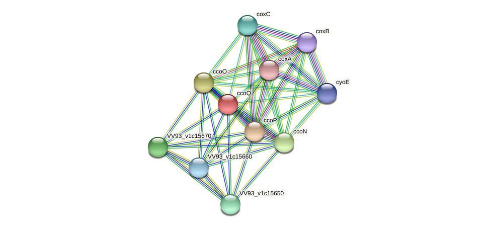 ccoQ protein (Vibrio vulnificus) - STRING interaction network