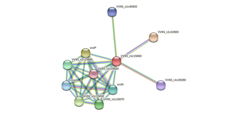 VV1676 protein (Vibrio vulnificus) - STRING interaction network