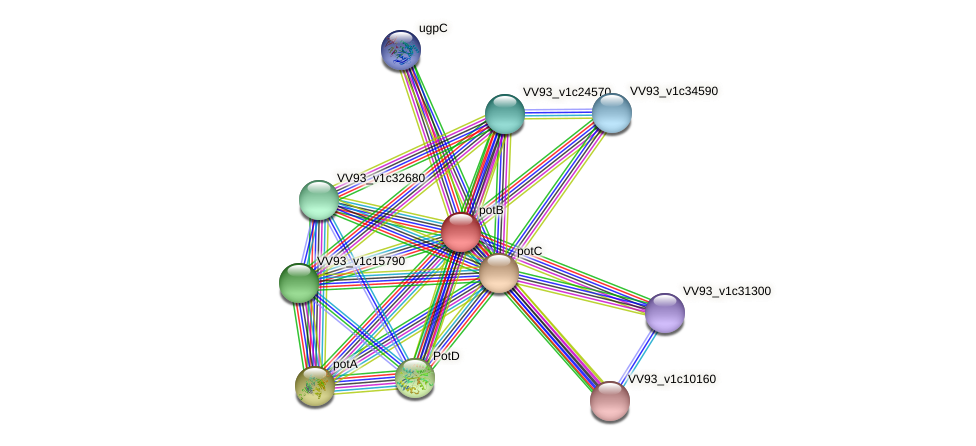 potB protein (Vibrio vulnificus) - STRING interaction network