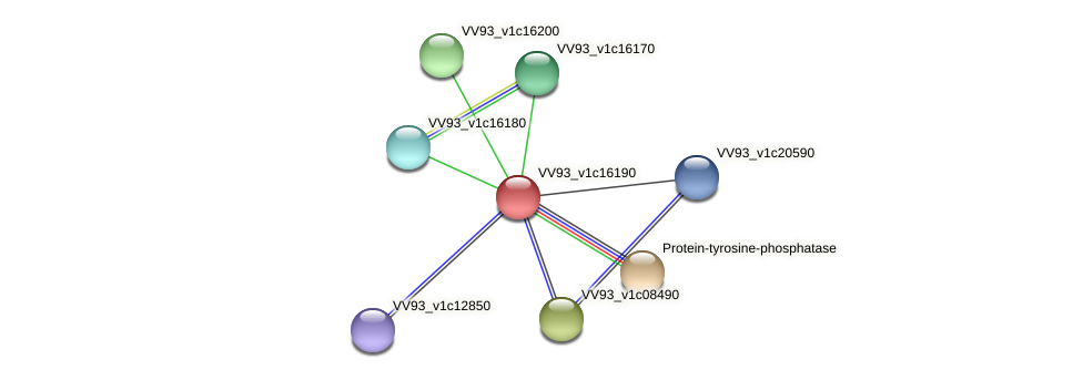 VV1727 protein (Vibrio vulnificus) - STRING interaction network