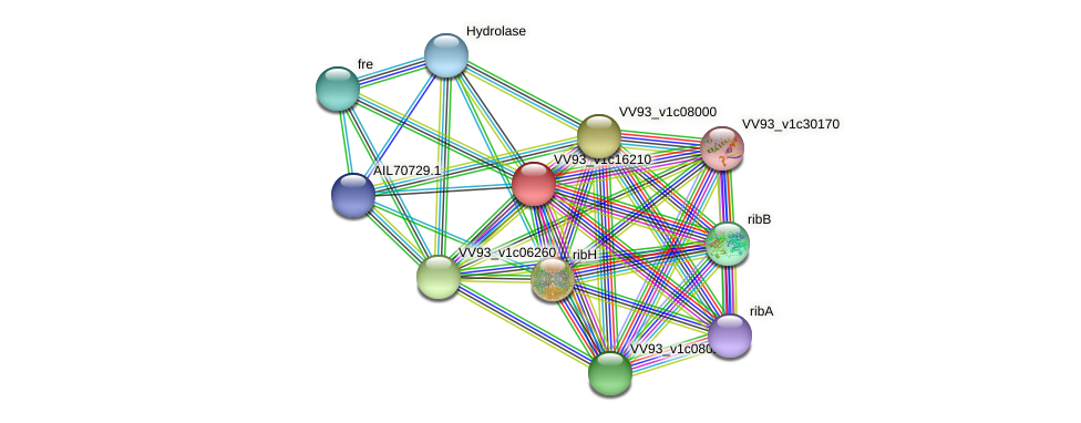 VV1729 protein (Vibrio vulnificus) - STRING interaction network