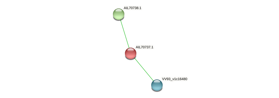 AIL70737.1 protein (Vibrio vulnificus) - STRING interaction network