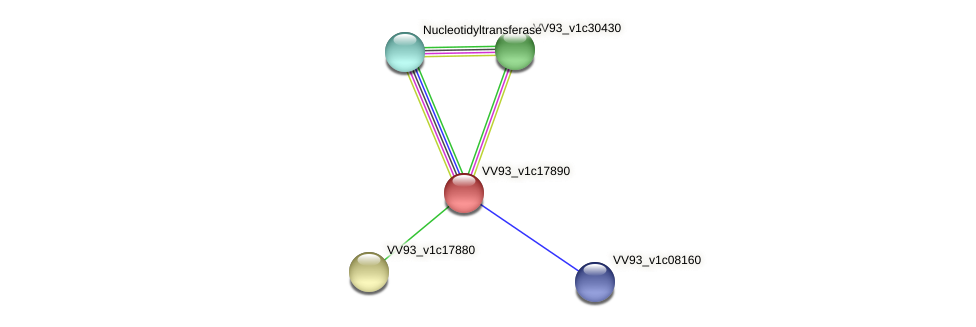 VV2028 protein (Vibrio vulnificus) - STRING interaction network