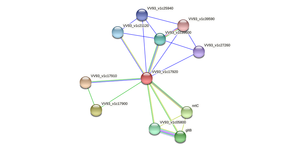 VV2031 protein (Vibrio vulnificus) - STRING interaction network