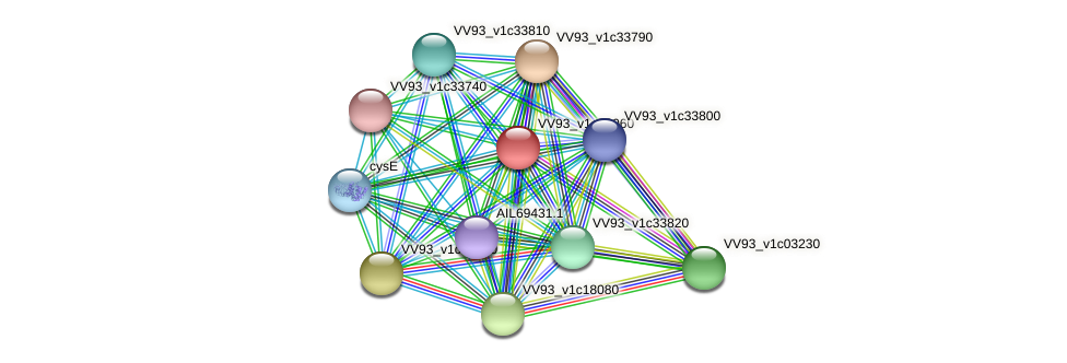 VV2041 protein (Vibrio vulnificus) - STRING interaction network