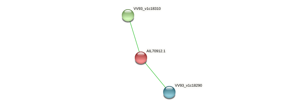 AIL70912.1 protein (Vibrio vulnificus) - STRING interaction network