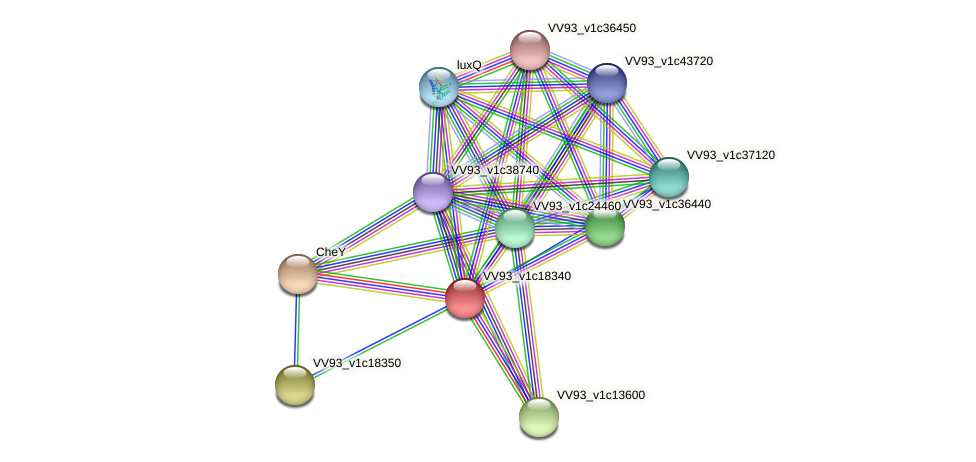 VV2070 protein (Vibrio vulnificus) - STRING interaction network