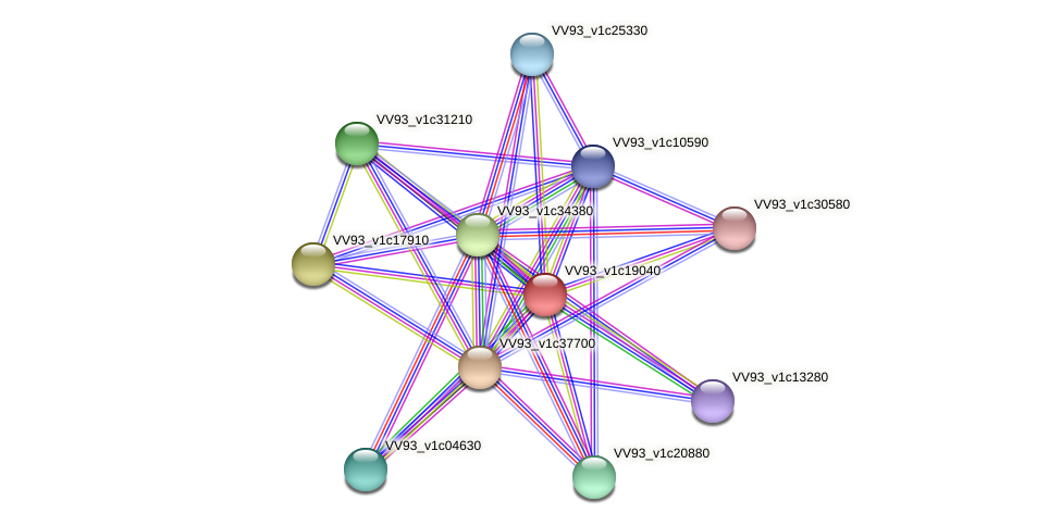 VV2142 protein (Vibrio vulnificus) - STRING interaction network