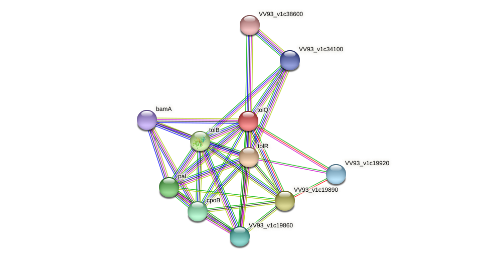 VV2278 protein (Vibrio vulnificus) - STRING interaction network