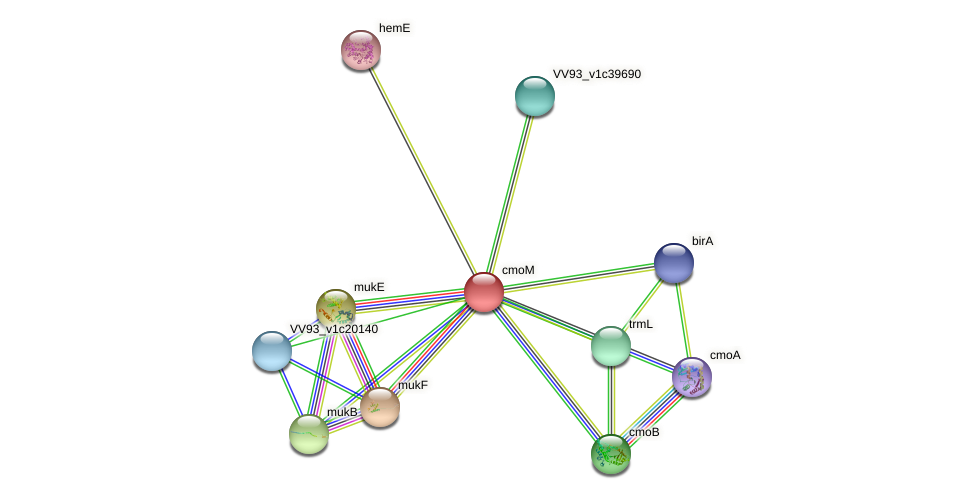 cmoM protein (Vibrio vulnificus) - STRING interaction network