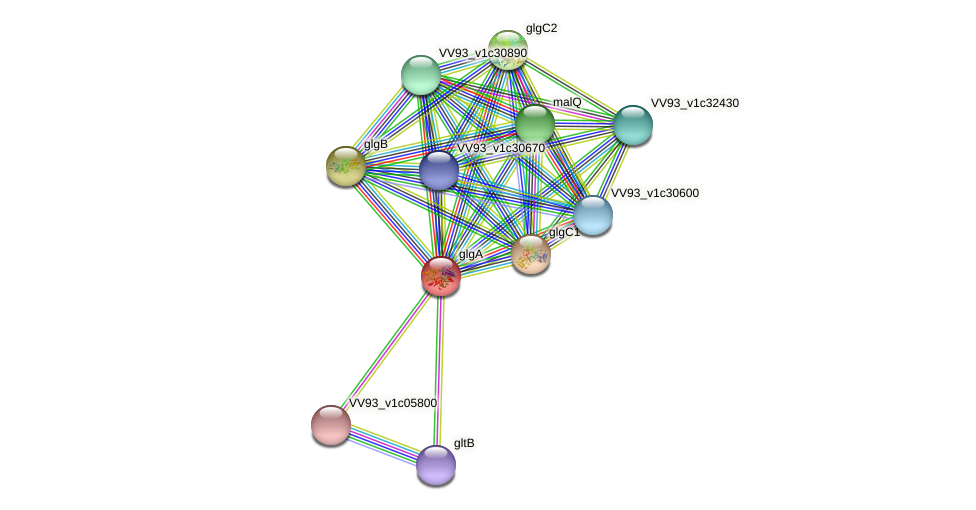 glgA protein (Vibrio vulnificus) - STRING interaction network
