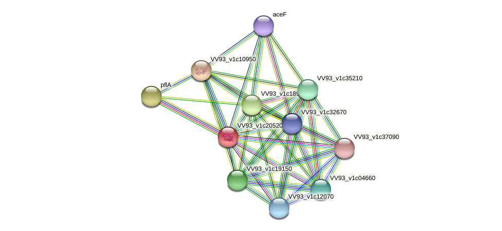 VV2342 protein (Vibrio vulnificus) - STRING interaction network