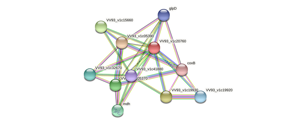 VV2368 protein (Vibrio vulnificus) - STRING interaction network