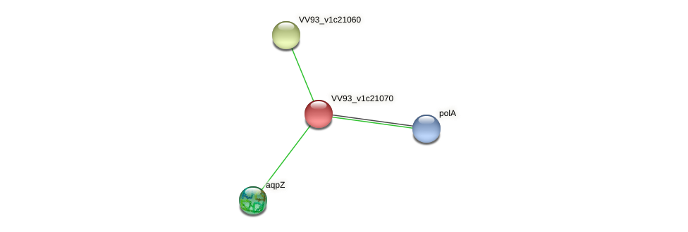 VV2403 protein (Vibrio vulnificus) - STRING interaction network