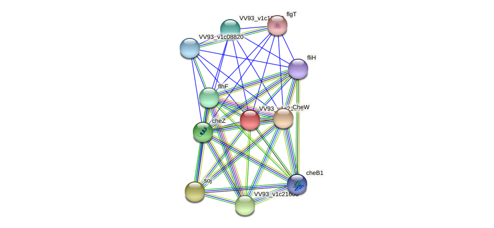 VV2456 protein (Vibrio vulnificus) - STRING interaction network