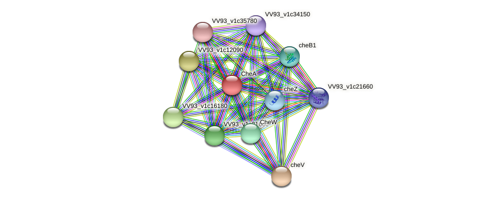 VV2461 protein (Vibrio vulnificus) - STRING interaction network