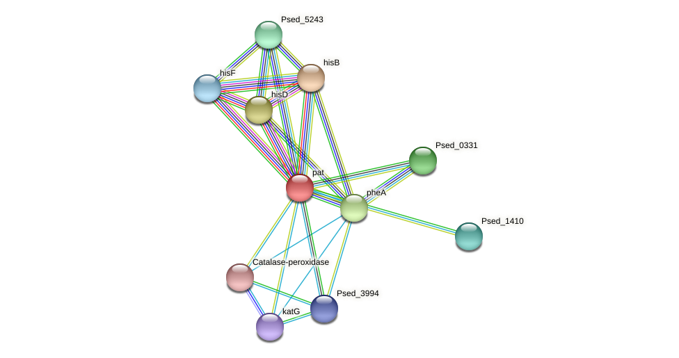 pat protein (Pseudonocardia dioxanivorans) - STRING interaction network