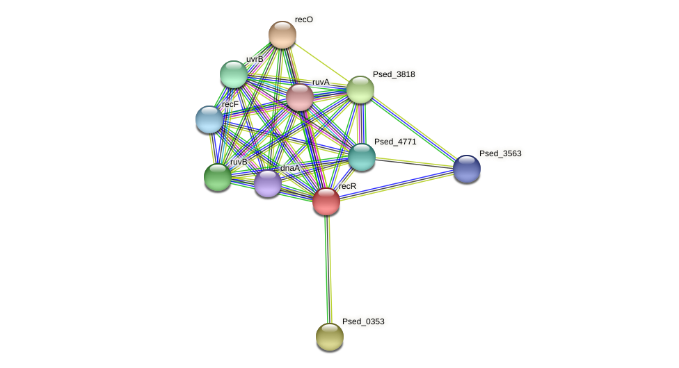 recR protein (Pseudonocardia dioxanivorans) - STRING interaction network