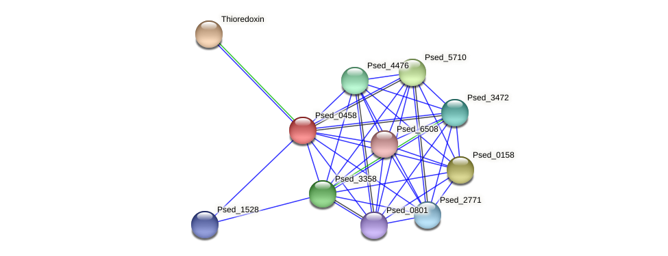 Psed_0458 protein (Pseudonocardia dioxanivorans) - STRING interaction network