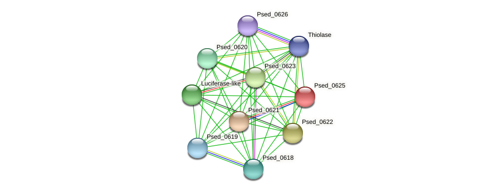Psed_0625 protein (Pseudonocardia dioxanivorans) - STRING interaction network