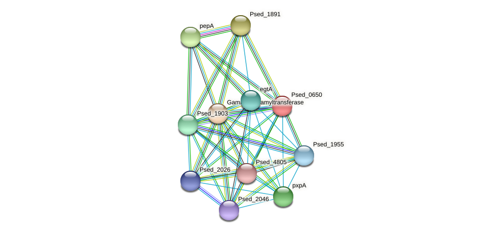 Psed_0650 protein (Pseudonocardia dioxanivorans) - STRING interaction network