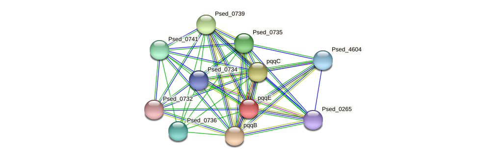 pqqE protein (Pseudonocardia dioxanivorans) - STRING interaction network