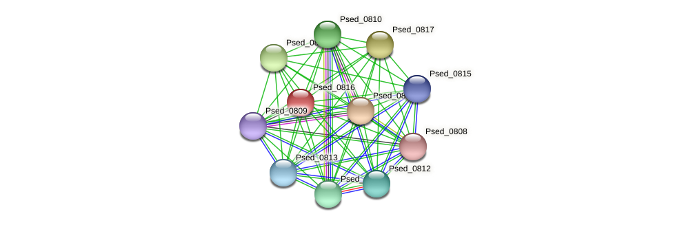 Psed_0816 protein (Pseudonocardia dioxanivorans) - STRING interaction network