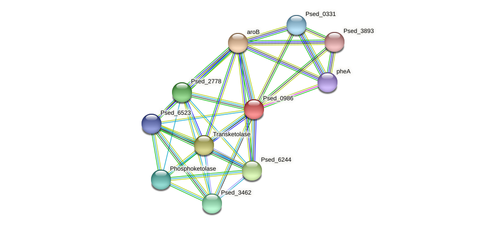 Psed_0986 protein (Pseudonocardia dioxanivorans) - STRING interaction network