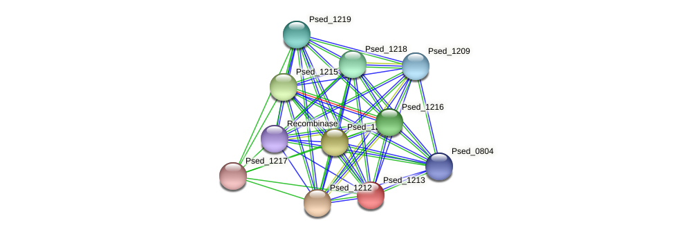 Psed_1213 protein (Pseudonocardia dioxanivorans) - STRING interaction network
