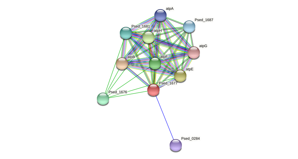 Psed_1677 protein (Pseudonocardia dioxanivorans) - STRING interaction network