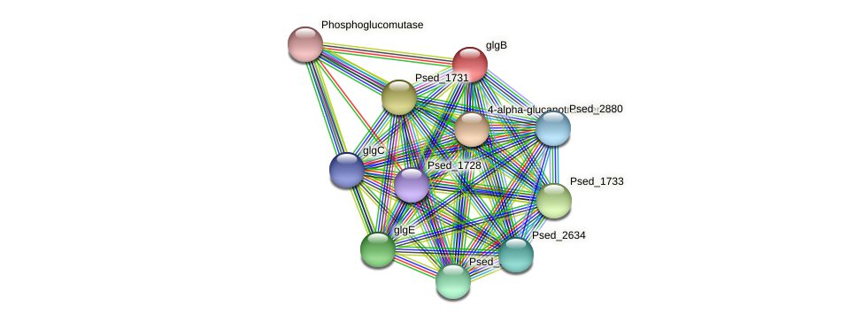 glgB protein (Pseudonocardia dioxanivorans) - STRING interaction network