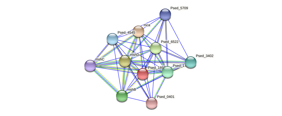 Psed_1897 protein (Pseudonocardia dioxanivorans) - STRING interaction network
