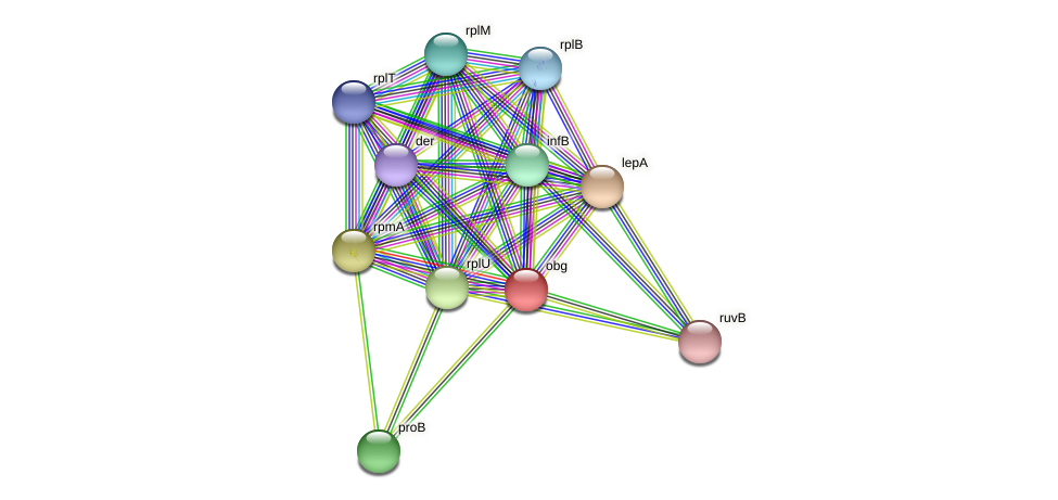 obg protein (Pseudonocardia dioxanivorans) - STRING interaction network