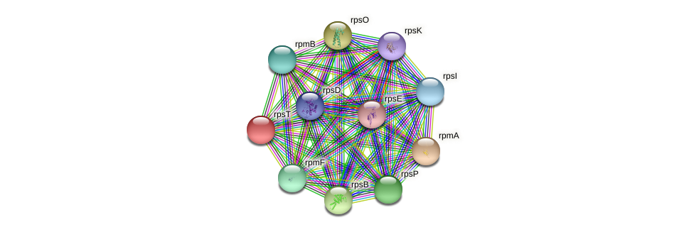 rpsT protein (Pseudonocardia dioxanivorans) - STRING interaction network
