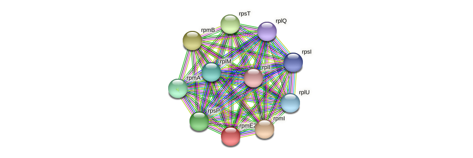rpmE2 protein (Pseudonocardia dioxanivorans) - STRING interaction network