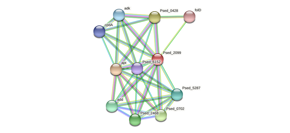 Psed_2099 protein (Pseudonocardia dioxanivorans) - STRING interaction network