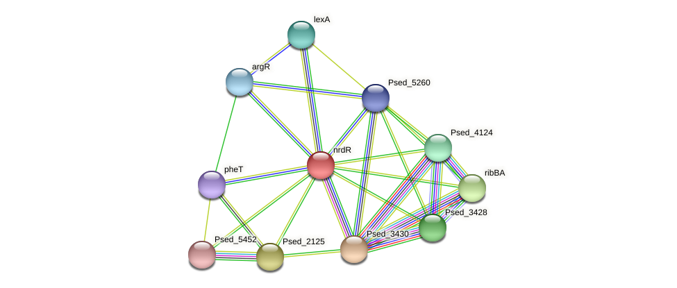 nrdR protein (Pseudonocardia dioxanivorans) - STRING interaction network
