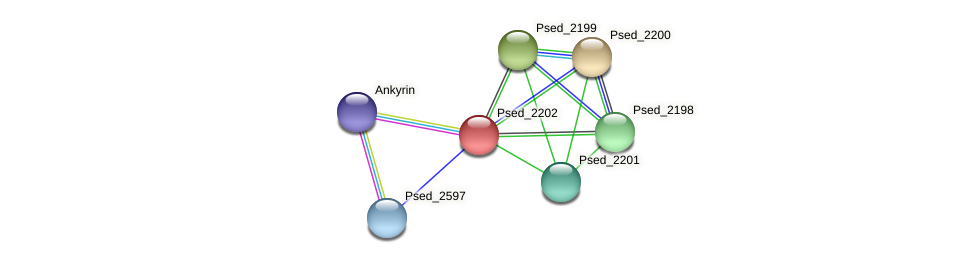 Psed_2202 protein (Pseudonocardia dioxanivorans) - STRING interaction network